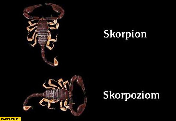 Skorpion skorpoziom