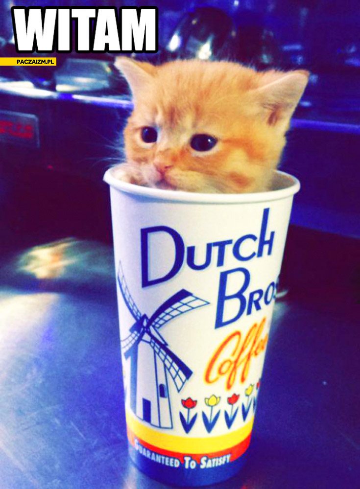 Słodki kotek kociak witam