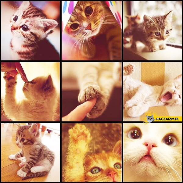 Słodkie kociaczki