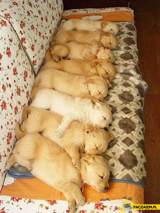 Słodkie szczeniaczki