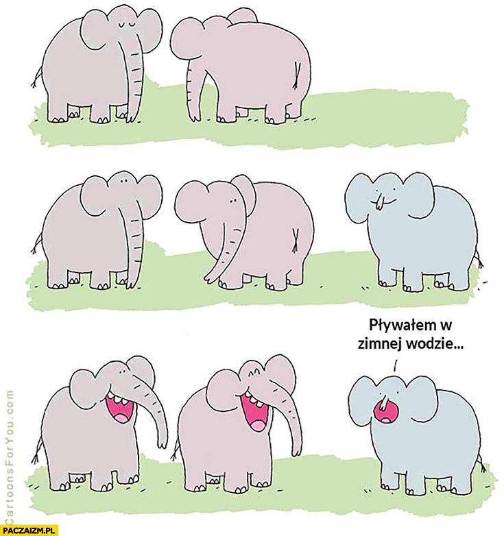 Słoń z małą trąbą: pływalem w zimnej wodzie