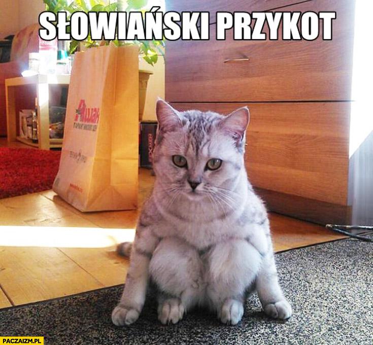 Słowiański przyckuc przykot kot