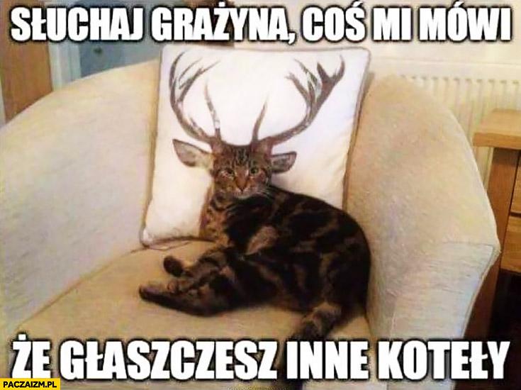 Słuchaj Grażyna coś mi mówi, że głaszczesz inne koteły kot kotek