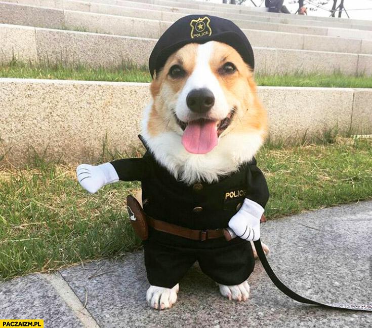 Śmieszny piesek przebrany za policjanta