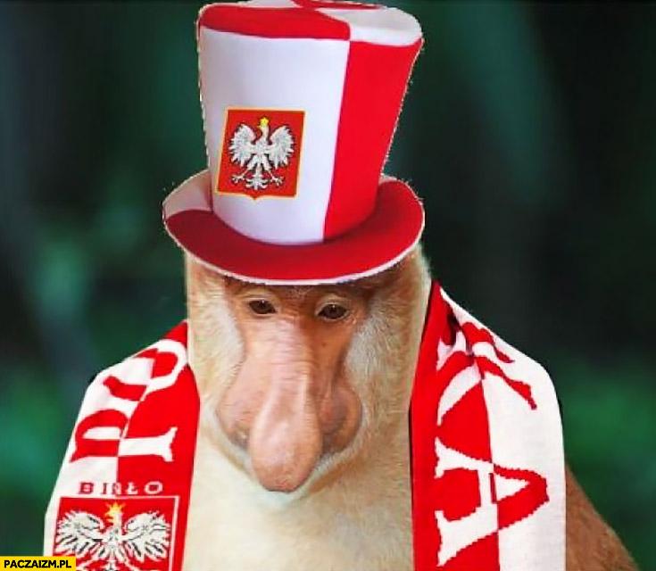 Smutna małpa nosacz sundajski kibic polski po przegranym meczu