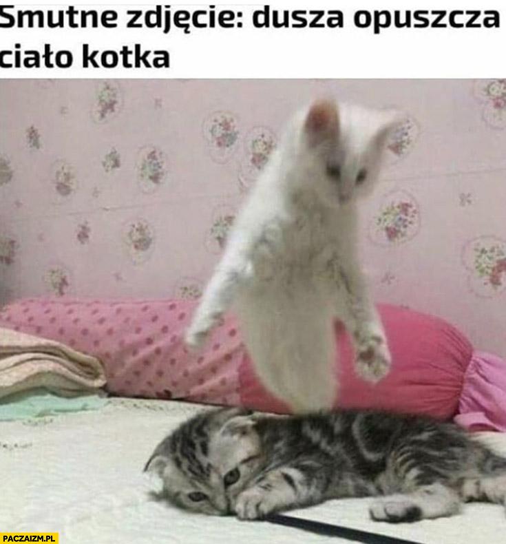 Smutne zdjęcie: dusza opuszcza ciało kotka