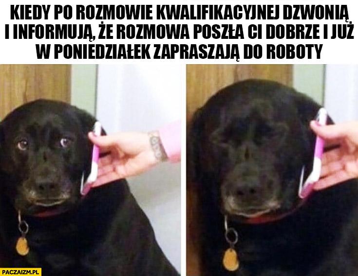 Smutny pies kiedy po rozmowie kwalifikacyjnej dzwonią i informują, że rozmowa poszła Ci dobrze i już w poniedziałek zapraszają do roboty