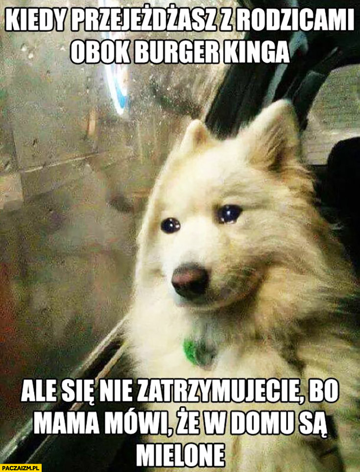 Smutny pies kiedy przejeżdżasz z rodzicami obok Burger Kinga ale się nie zatrzymujecie bo mama mówi, że w domu są mielone