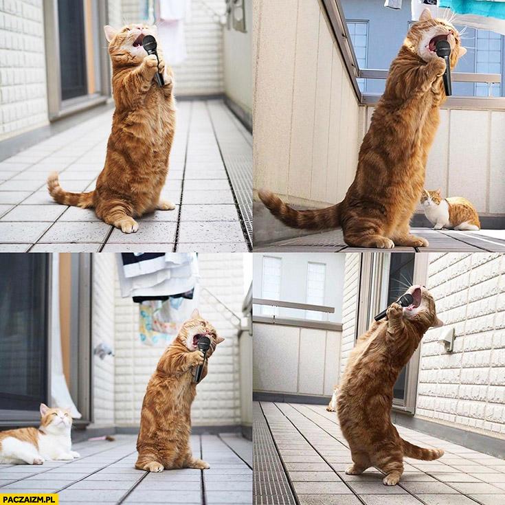 Śpiewający kot z mikrofonem piosenkarz