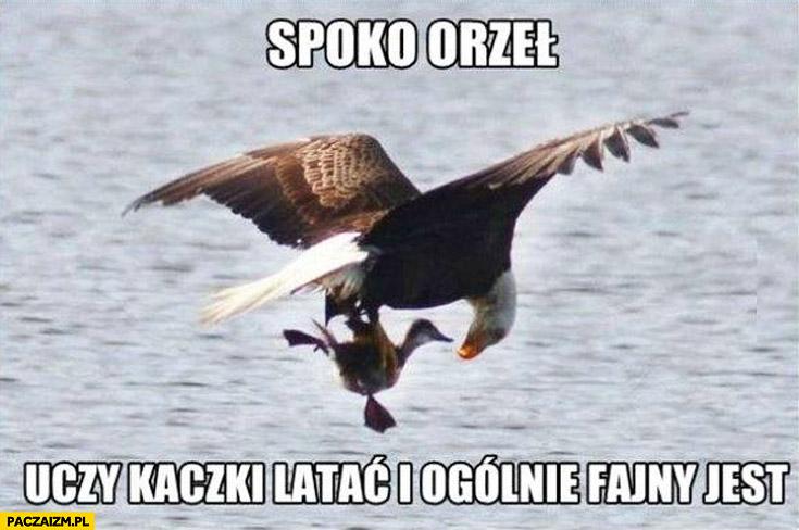 Spoko orzeł uczy kaczki latać i w ogóle fajny jest