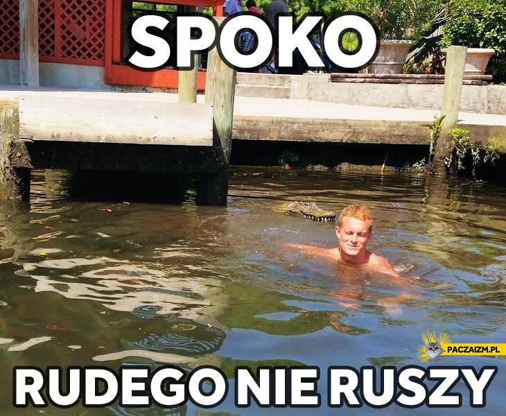 Spoko rudego nie ruszy krokodyl