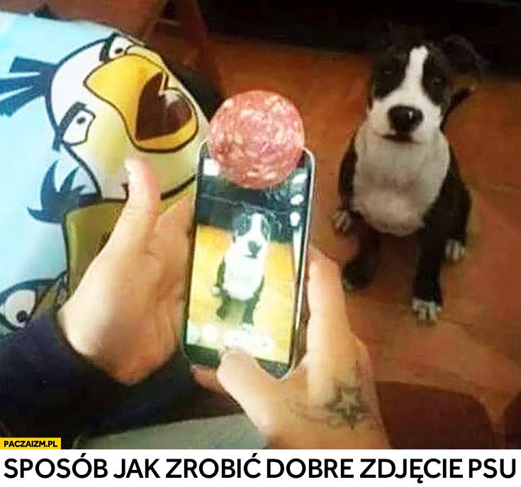 Sposób jak zrobić dobre zdjęcie psu plaster szynki mięsa na aparacie