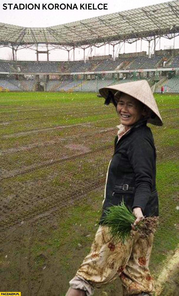 Stadion Korona Kielce uprawa ryżu Chinka