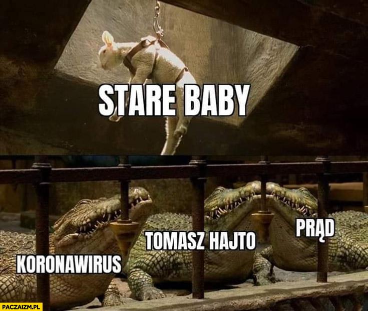 Stare baby zrzucane aligatorom na pożarcie: prąd, Tomasz Hajto, koronawirus