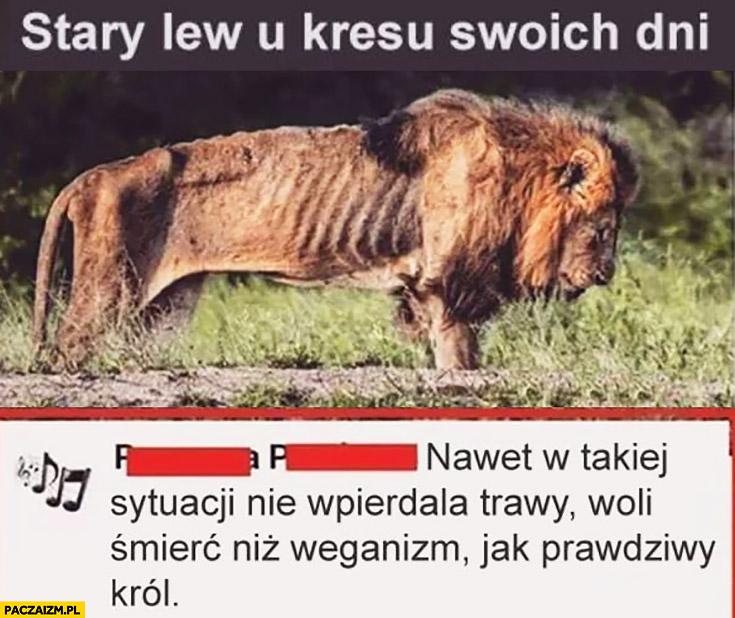 Stary lew u kresu swoich dni: nawet w takiej sytuacji nie wpierdala trawy woli śmierć niż weganizm jak prawdziwy król