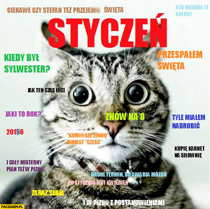 Styczeń zdziwiony kot typowy student: przespałem święta, znów na 8, zaraz sesja