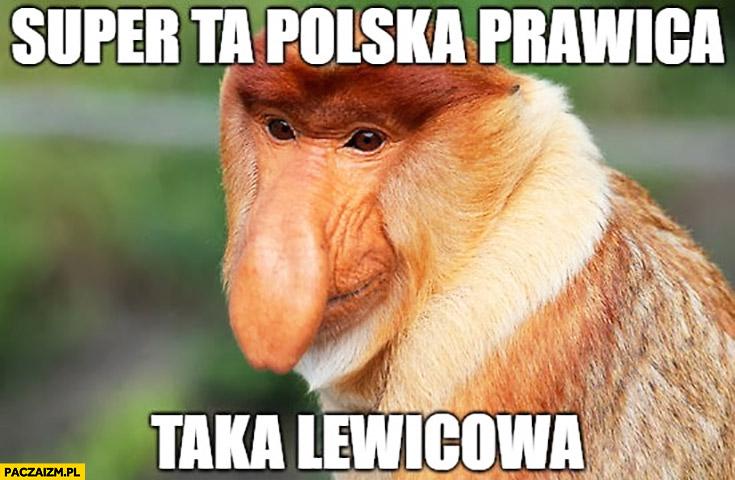Super ta polska prawica taka lewicowa typowy Polak nosacz małpa
