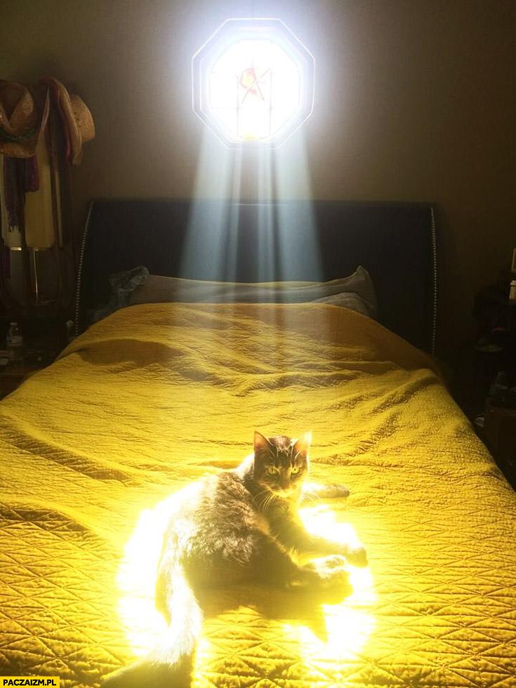 Święty kot w świetle witraża
