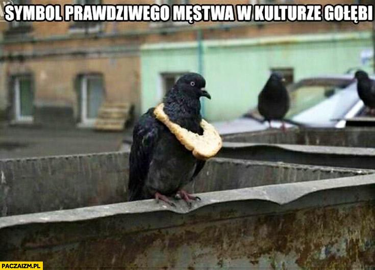 Symbol prawdziwego męstwa w kulturze gołębi
