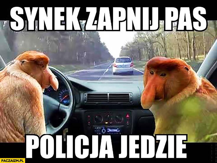 Synek zapnij pas policja jedzie typowy Polak nosacz małpa kierowca