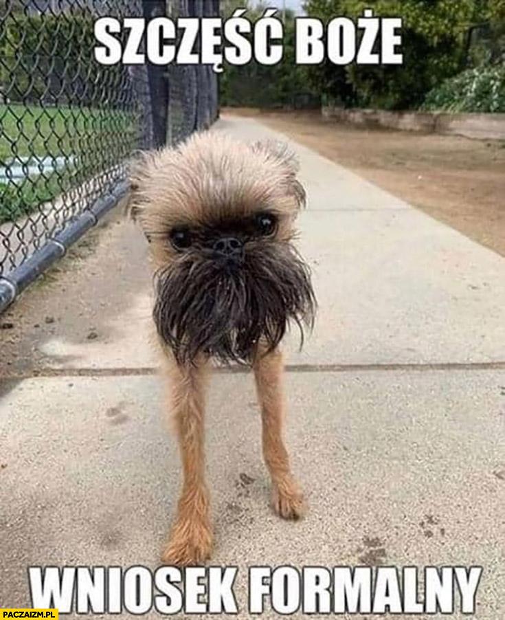 Szczęść Boże wniosek formalny pies Grzegorz Braun