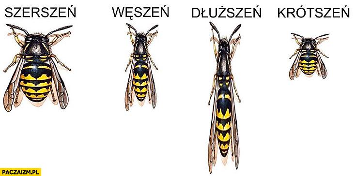 https://paczaizm.pl/content/wp-content/uploads/szerszen-weszen-dluzszen-krotszen-zmiana-wymiarow-rozmiaru.jpg