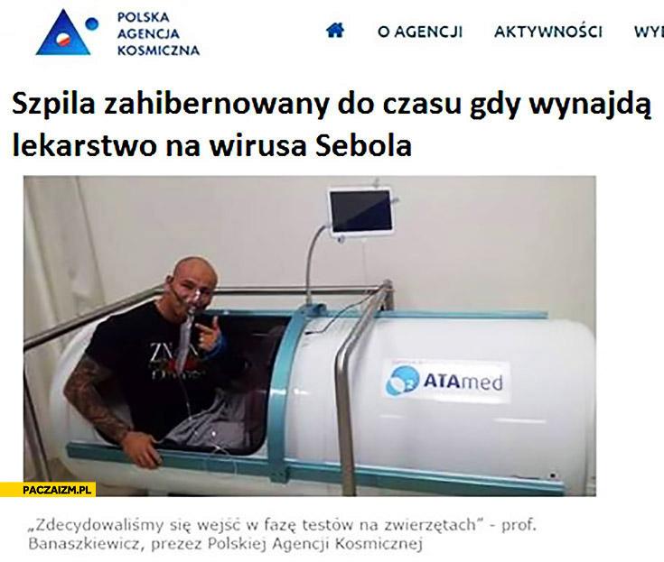 Szpila zahibernowany do czasu gdy wynajdą lekarstwo na wirusa Sebola Artur Szpilka