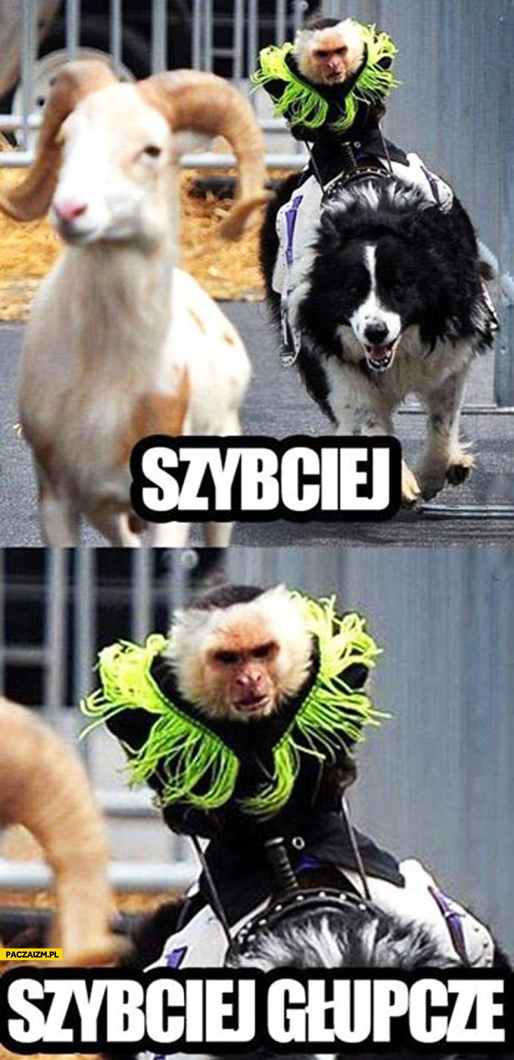 Szybciej głupcze małpa jedzie na psie