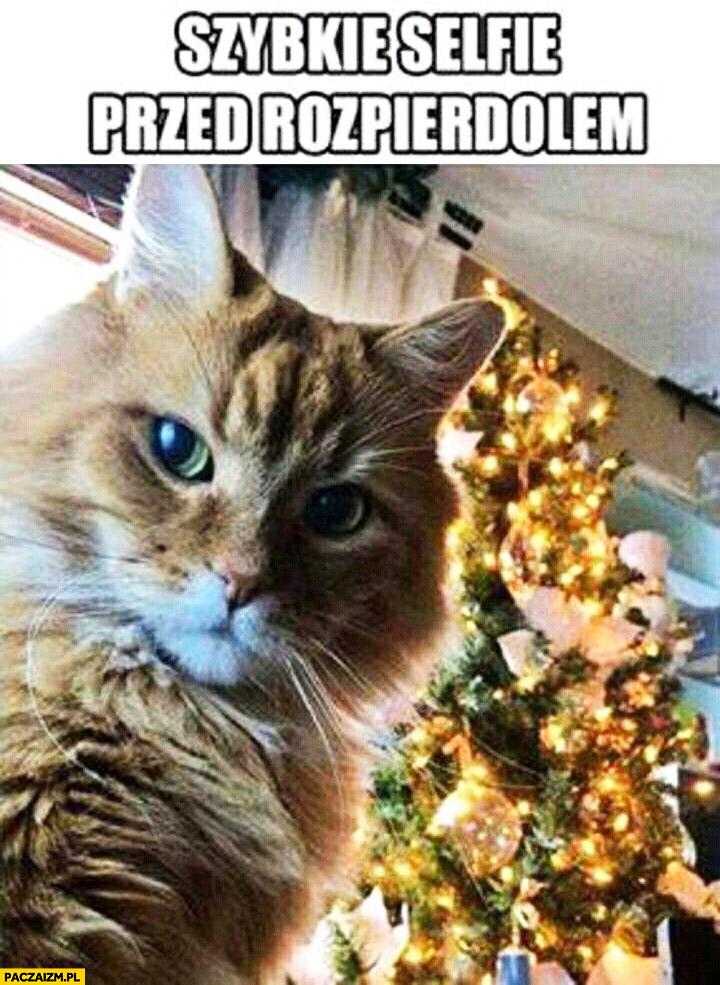 Szybkie selfie przed rozpierdzielem kot choinka