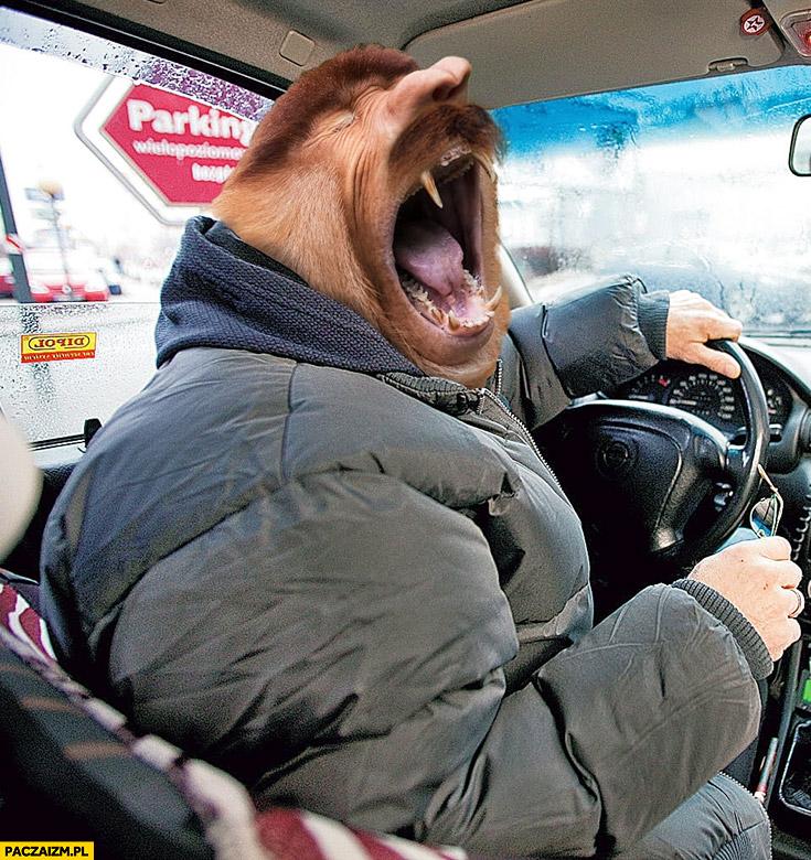 Taksówkarz złotówa typowy Polak nosacz małpa przeróbka