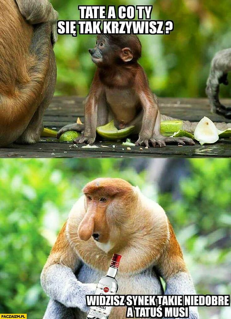 Tata a co Ty się tak krzywisz? Widzisz synek, takie niedobre a tatuś musi wódka typowy Polak nosacz małpa
