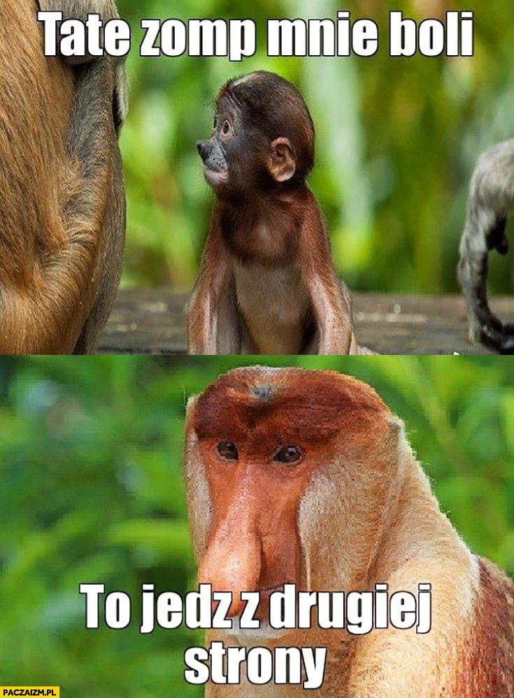 Tata ząb mnie boli, to jedz z drugiej strony typowy Polak nosacz małpa