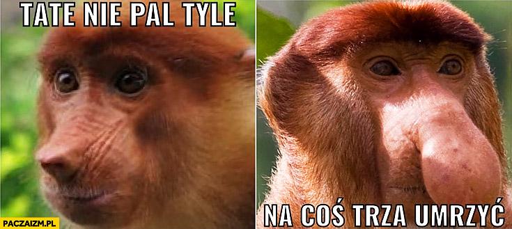 Tate nie pal tyle na coś trzeba umrzeć typowy Polak nosacz małpa