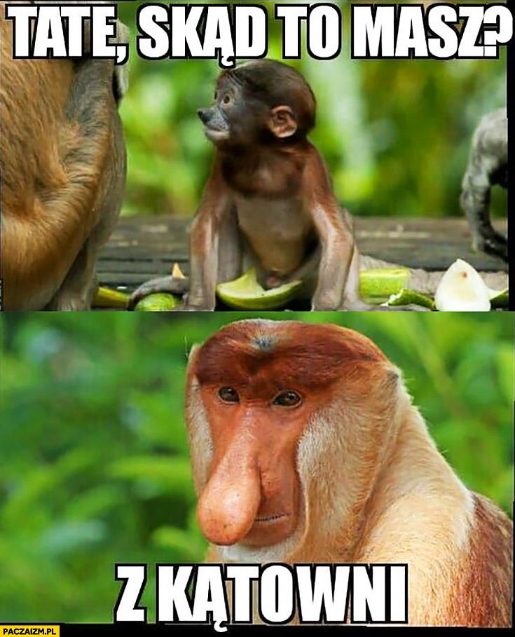 Tato skąd to masz? Z kątowni typowy Polak nosacz małpa