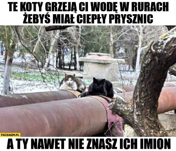 Te koty grzeją Ci wodę w rurach żebyś miał ciepły prysznic a Ty nawet nie znasz ich imion