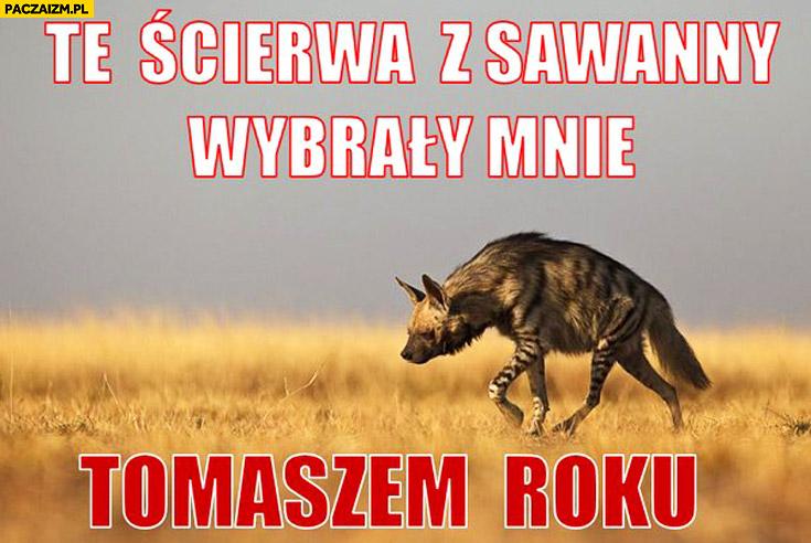 Te ścierwa z sawanny wybrały mnie Tomaszem roku hiena Tomasz Lis