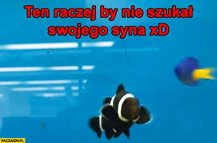 Ten by raczej nie szukał swojego syna czarna ryba rybka gdzie jest Nemo