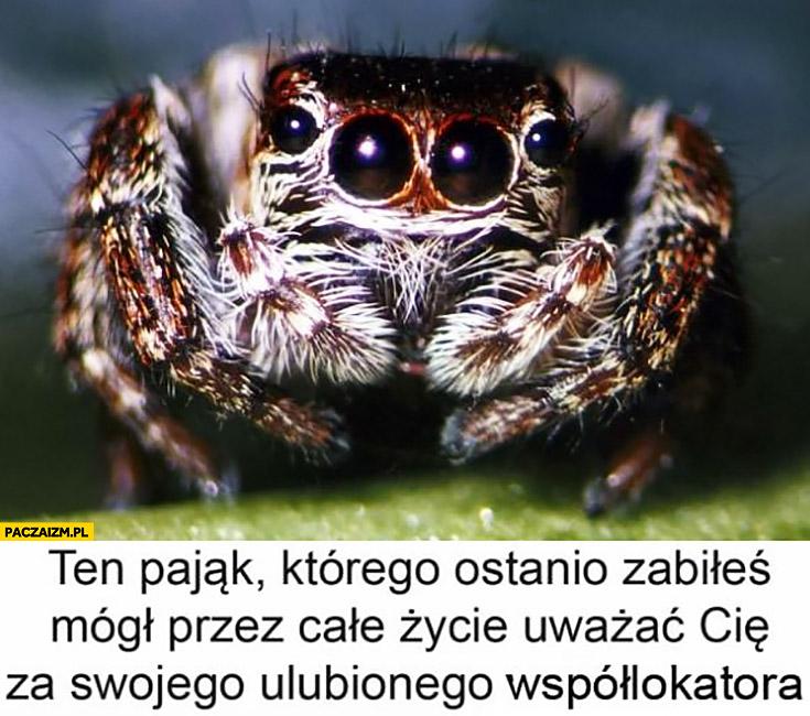 Ten pająk którego ostatnio zabiłeś mógł przez całe życie uważać Cię za swojego ulubionego współlokatora