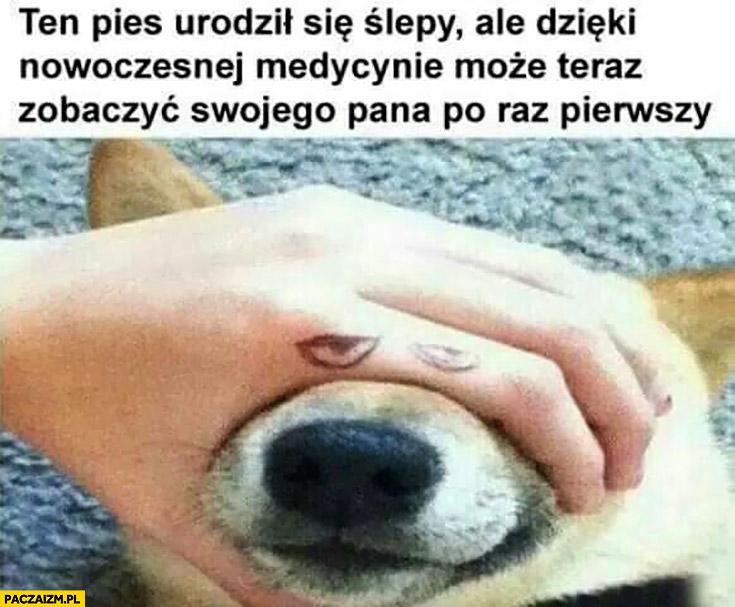 Ten pies urodził się ślepy ale dzięki medycynie może teraz zobaczyć swojego pana po raz pierwszy. Dorysowane oczy