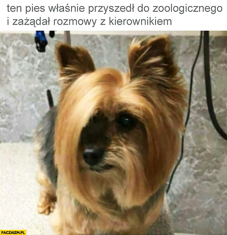 Ten pies właśnie przyszedł do zoologicznego i zażądał rozmowy z kierownikiem