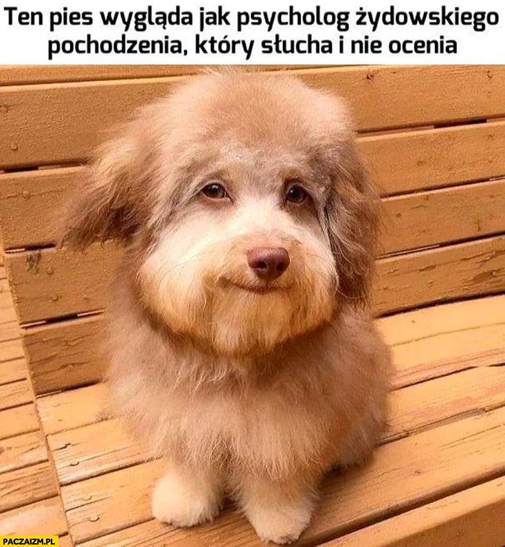 Ten pies wygląda jak psycholog żydowskiego pochodzenia który słucha i nie ocenia