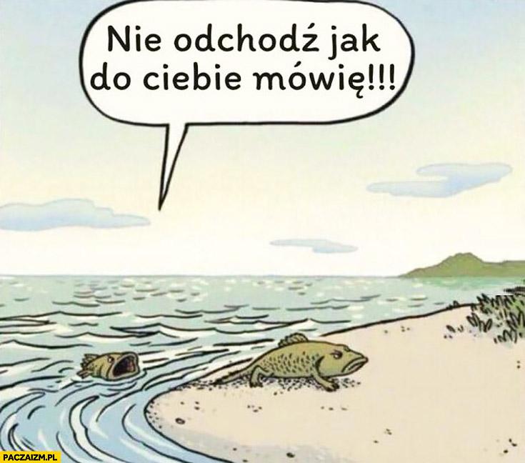 Teoria ewolucji ryba wychodzi z wody, żona krzyczy nie odchodź jak do Ciebie mówię
