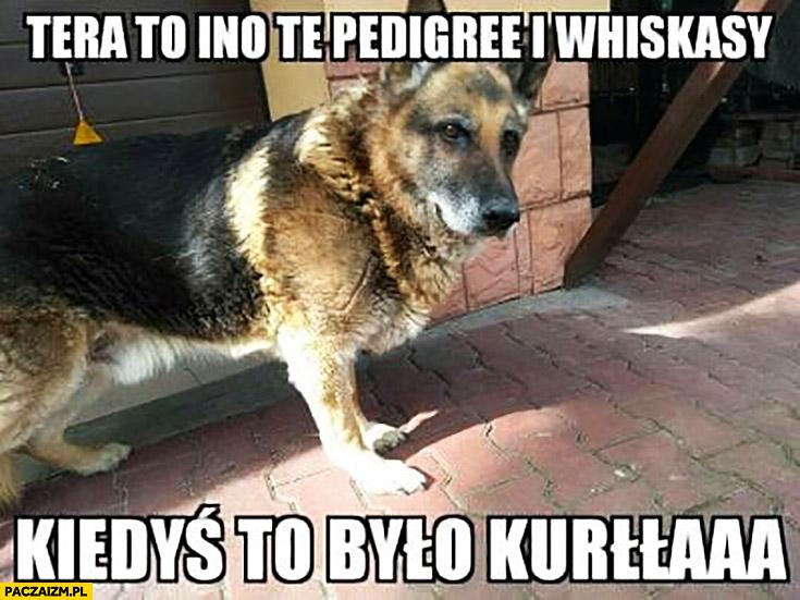 Teraz to ino te Pedigree i Whiskasy kiedyś to było kurna stary pies