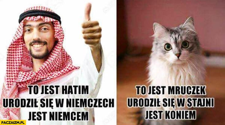 To jest Hatim, urodził się w Niemczech wiec jest Niemcem, to jest mruczek urodził się w stajni, więc jest koniem kot arab