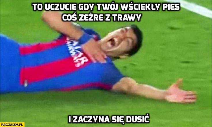 To uczucie gdy Twój wściekły pies coś zeżre z trawy i zaczyna się dusić Suarez