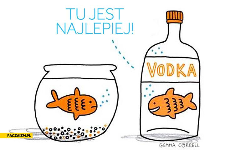 Tu jest najlepiej rybka w wódce