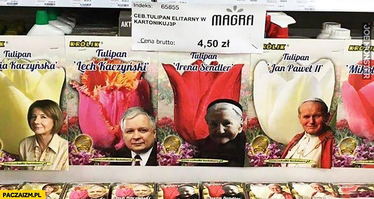 Tulipan Lech Kaczyński, Maria Kaczyńska, Jan Paweł II nasiona tulipana w sklepie