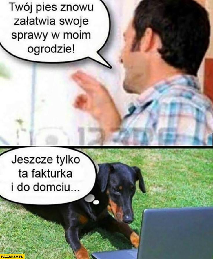 Twój pies znowu załatwia swoje sprawy w moim ogrodzie, jeszcze tylko ta fakturka i do domciu. Pies pracuje przy komputerze