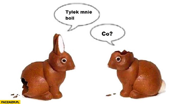 Tyłek mnie boli co króliczki zające z czekolady