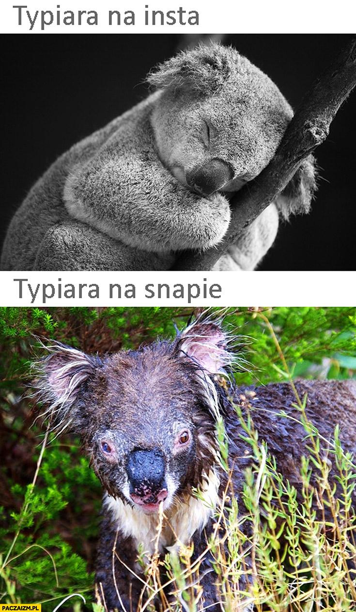 Typiara na insta laska na snapie porównanie koala